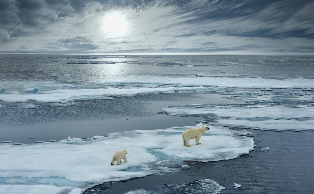 svalbard polar bears on ice yoga and meditation retreat